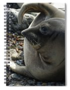 Elephant Seal Spiral Notebook