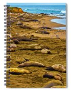 Elephant Seals Near Cambria  Spiral Notebook