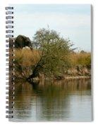 Elephant Sighting Spiral Notebook