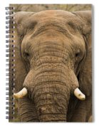 Elephant Watching Spiral Notebook