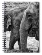 Elephants Bw Spiral Notebook