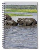 Elephants Crossing Chobe River Spiral Notebook