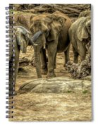 Elephants Social Spiral Notebook