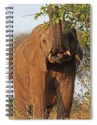 Elephant's Supper Time Spiral Notebook