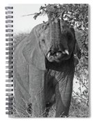 Elephant's Supper Time In Black And White Spiral Notebook