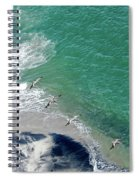 Eleven Brown Pelicans Spiral Notebook