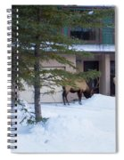 Elk Come Calling Spiral Notebook