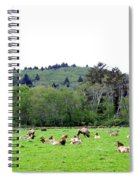 Elk Herd Spiral Notebook