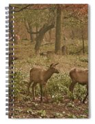 Elk In The Early Morning Spiral Notebook
