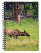 Elk In The Field Spiral Notebook
