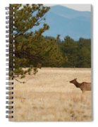 Elk In The Fossil Beds Spiral Notebook