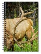 Elk In The Woods Spiral Notebook
