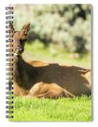 Elk   Spiral Notebook