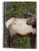 Elk Looking Back Spiral Notebook
