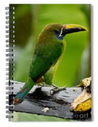 Emerald Toucanet In The Rain Spiral Notebook