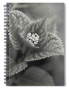 Emerging Hydrangea Spiral Notebook