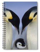 Emperor Penguin Family Spiral Notebook