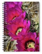 Engleman's Hedgehog Cactus  Spiral Notebook