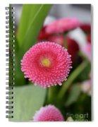 English Daisies Spiral Notebook