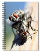Entomologists Discover Why People Want To Be A Fly On The Wall Spiral Notebook