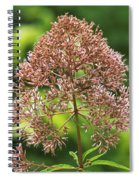 Epargyreus Clarus On Joe-pyed Weed Spiral Notebook