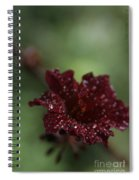 Eternal Harmony Spiral Notebook