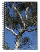 Eucalyptus Spiral Notebook