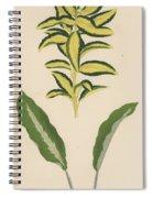Euonymus Japonica Aurea Variegata, Maranta Micans Spiral Notebook