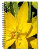 Euphorbia Wallichii Spiral Notebook