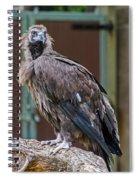 Eurasian Black Vulture 1 Spiral Notebook