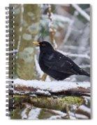 Eurasian Blackbird In The Snow Spiral Notebook