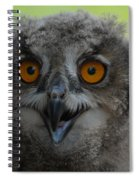 Eurasian Eagle Owl Chick Spiral Notebook