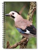 Eurasian Jay  Spiral Notebook