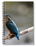 Eurasian Kingfisher Spiral Notebook