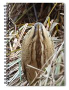 European Bittern Spiral Notebook
