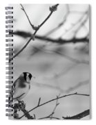 European Goldfinch 1 Spiral Notebook