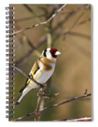 European Goldfinch 2 Spiral Notebook