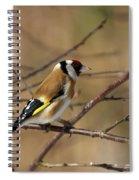 European Goldfinch 5 Spiral Notebook