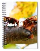 European Hornets Spiral Notebook