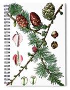 European Larch, Pinus Larix Spiral Notebook