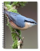 European Nuthatch Spiral Notebook