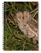European Scops Owl  Spiral Notebook