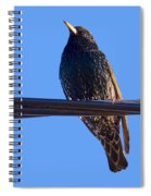 European Starling Trasparent Background Spiral Notebook