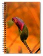 Evening Kiss Spiral Notebook