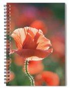 Evening Sun Illumination Spiral Notebook