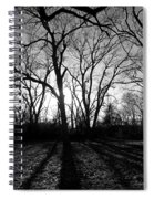 Evening Sun Through The Trees Spiral Notebook