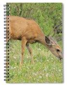 Evening Visitor Spiral Notebook
