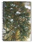 Evergreen Spiral Notebook
