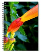 Evolution Of The Trumpet Flower I Spiral Notebook