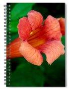 Evolution Of The Trumpet Flower II Spiral Notebook